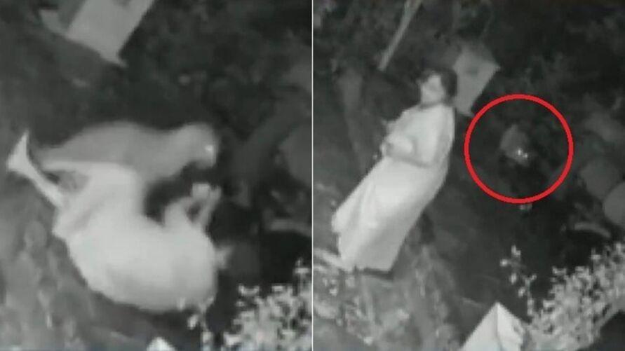 Imagem ilustrativa da notícia: Vídeo: idosa usa bengala para se defender de leopardo