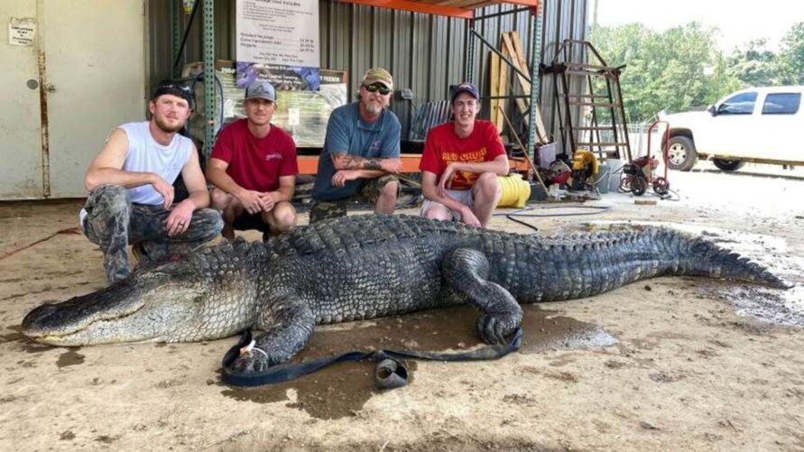 Animal foi capturado no início de setembro no estado de Mississipi