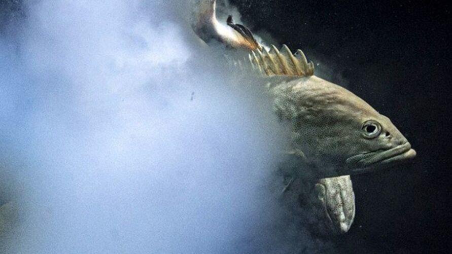 A imagem em questão parece uma explosão subaquática