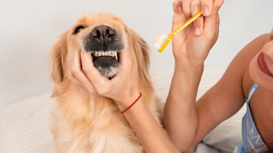 Imagem ilustrativa da notícia: Como cuidar da saúde e da higiene bucal do seu pet?