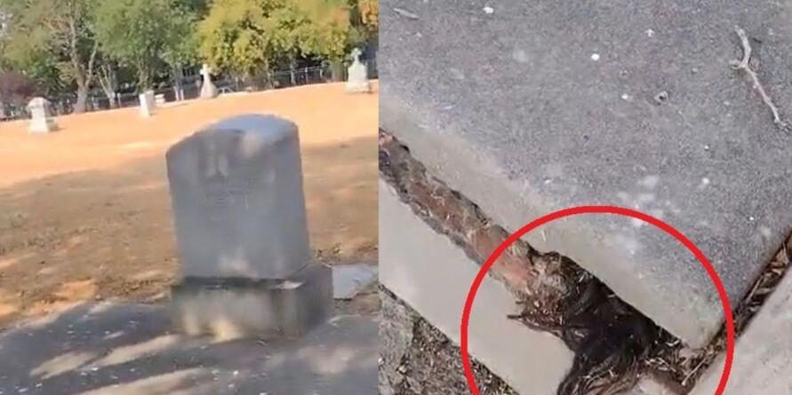 Imagem ilustrativa da notícia: Vídeo: fios de cabelo saem de túmulo de mais de 100 anos