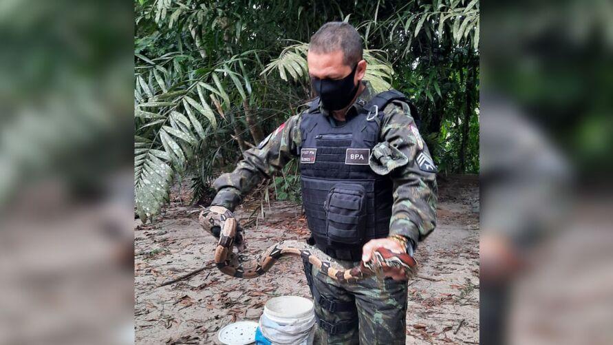Em caso de aparecimento de cobra em área urbana, os moradores devem acionar o Batalhão de Polícia Ambiental.