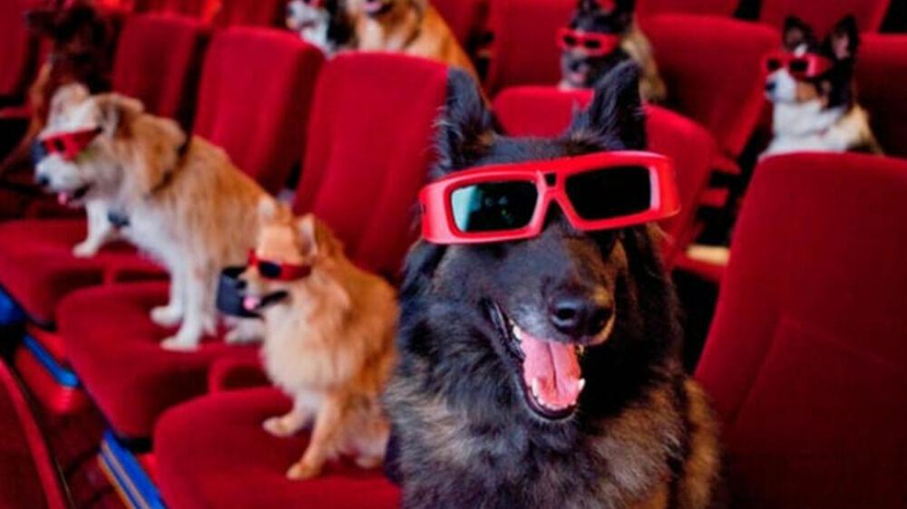 Imagem ilustrativa da notícia: Sessão de cinema aberta a animais é opção de lazer para o final de semana