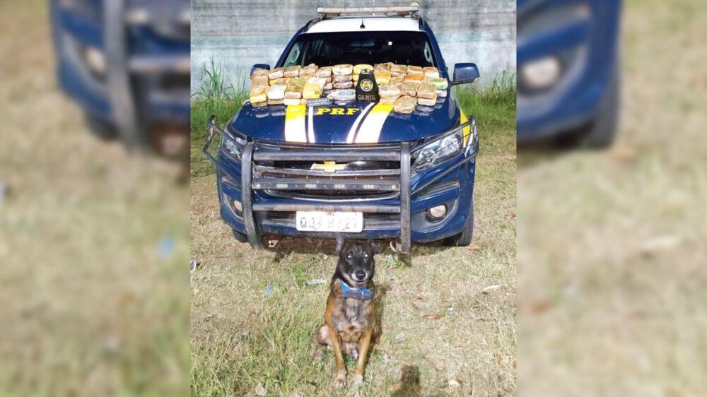 Pasta base de cocaína estava escondida no assoalho falso de uma caminhonete