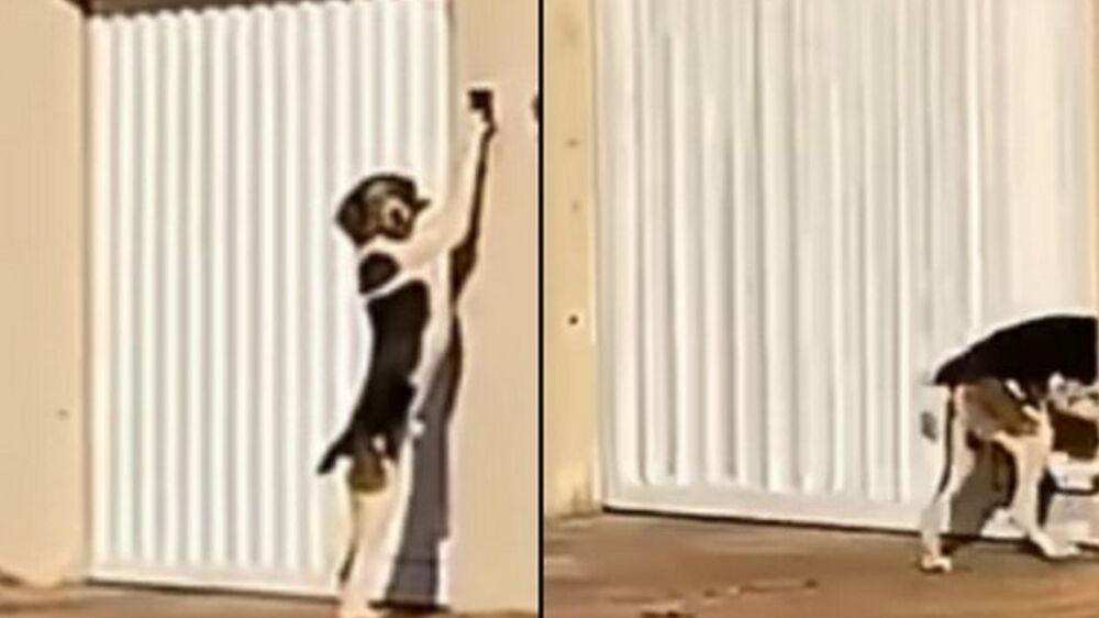 Imagens de cachorro tocando campainha de casa, viralizaram nas redes sociais.