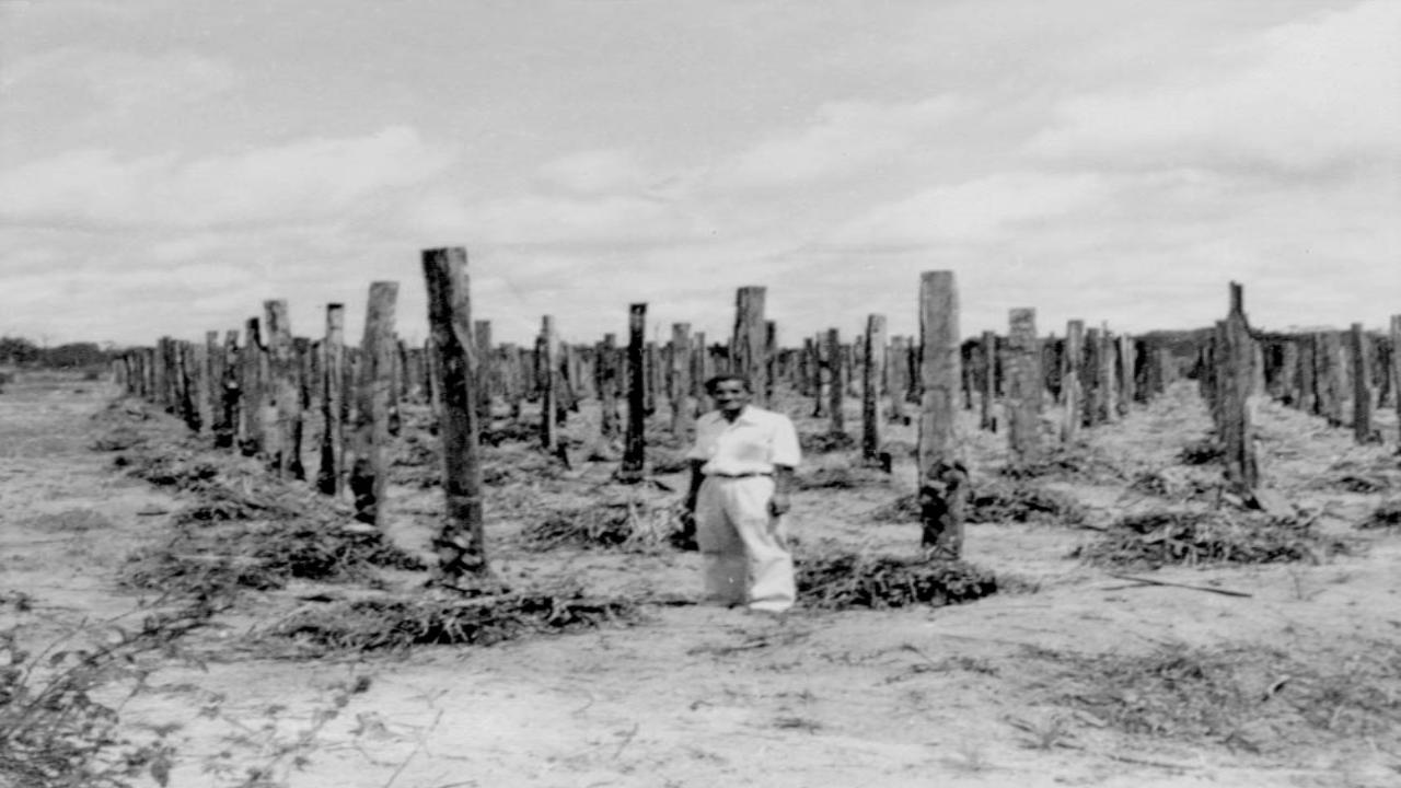 Japônes construindo estruturas para agricultura, em Tomé-Açu.