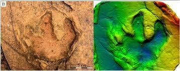 Segundo o especialista, as pegadas dão pistas do tamanho dos dinossauros