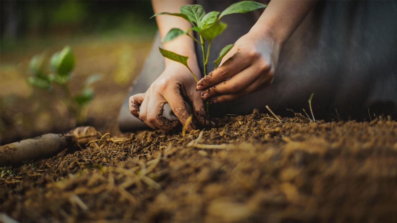 Reflorestamento é uma das políticas da empresa