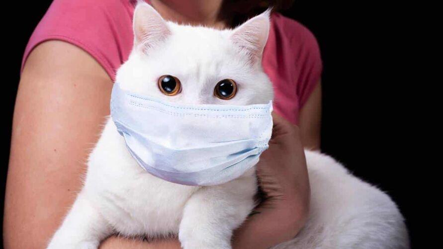 Apesar dos resultados do estudo, pesquisadores afirmam que os donos de felinos não devem se alarmar.
