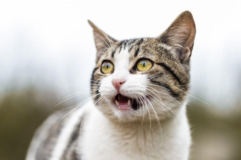 Família leva gato para cremação e, ao voltar para casa, dão de cara com ele.