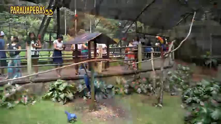 Imagem ilustrativa da notícia: Parauapebas 33 anos: Conheça o parque Zoobotânico Vale